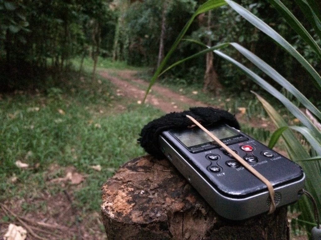 jungle field recording - belize