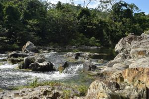 jungle in belize